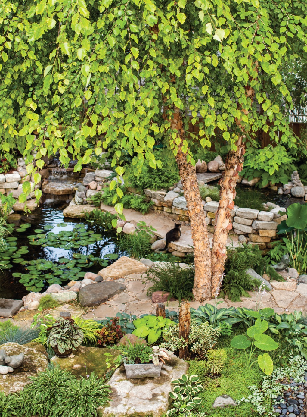 Back-Garden-Pond