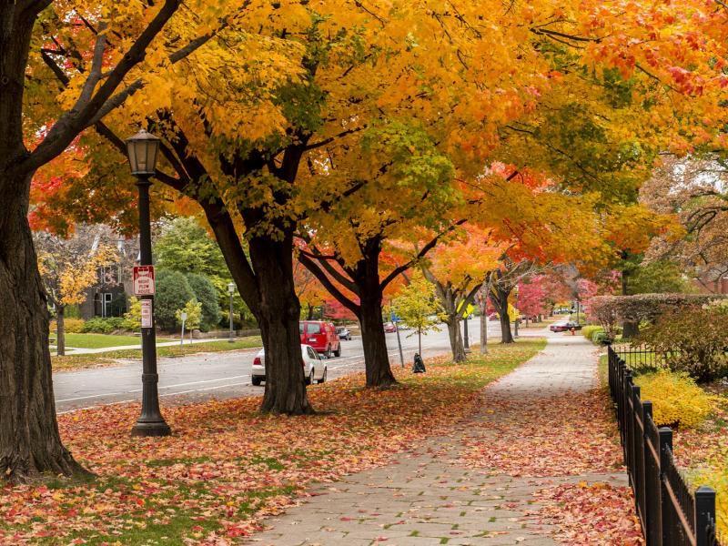 Fall Tree on Summit Ave