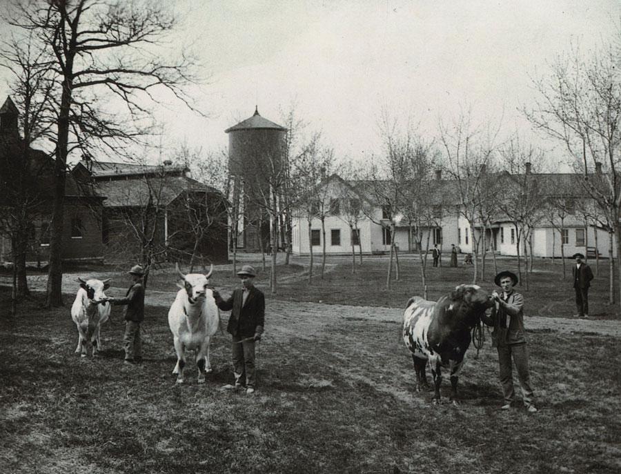 Old North Oaks Farm