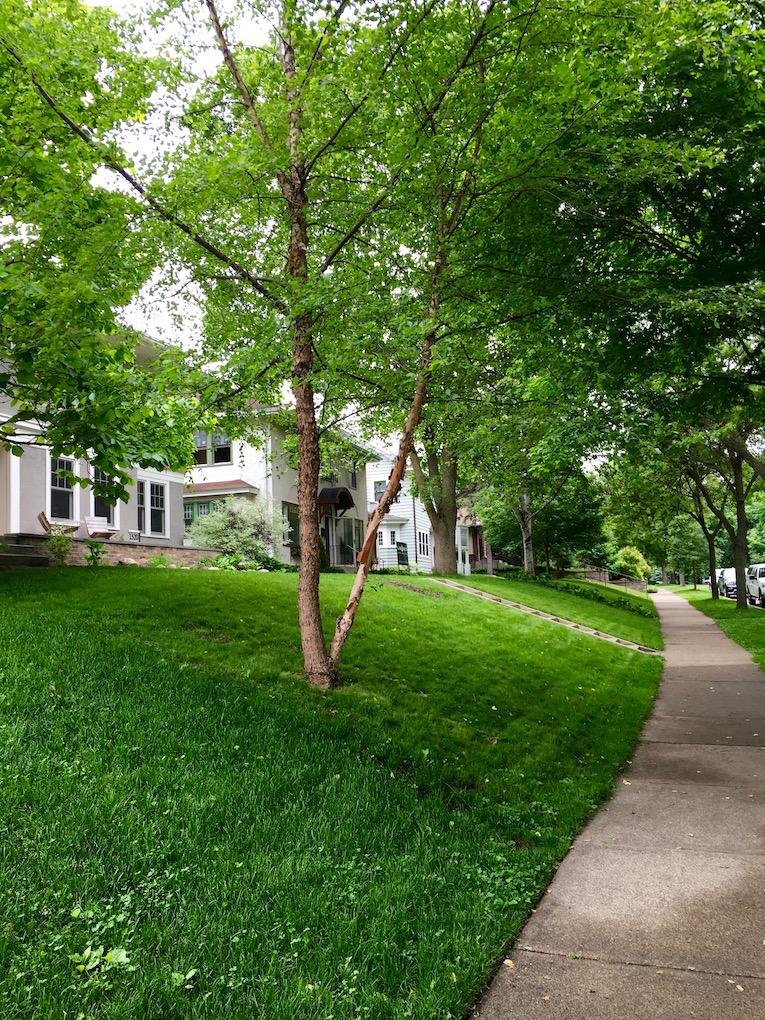 lynnhurst neighborhood