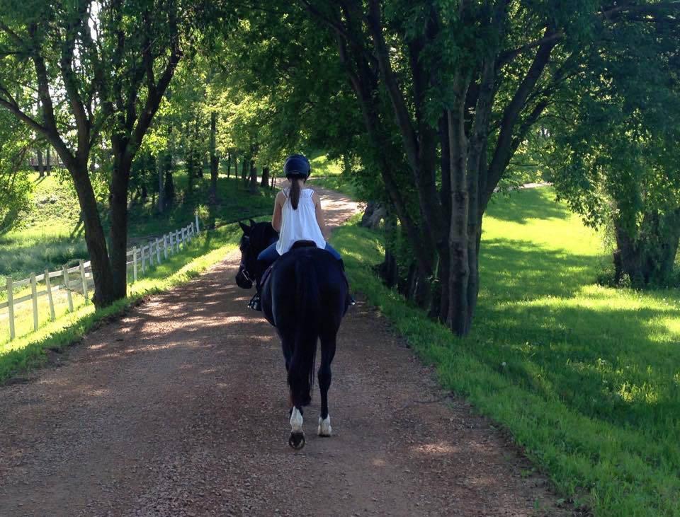 Medina Equestrian