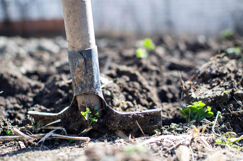 Shovel breaking ground in soil