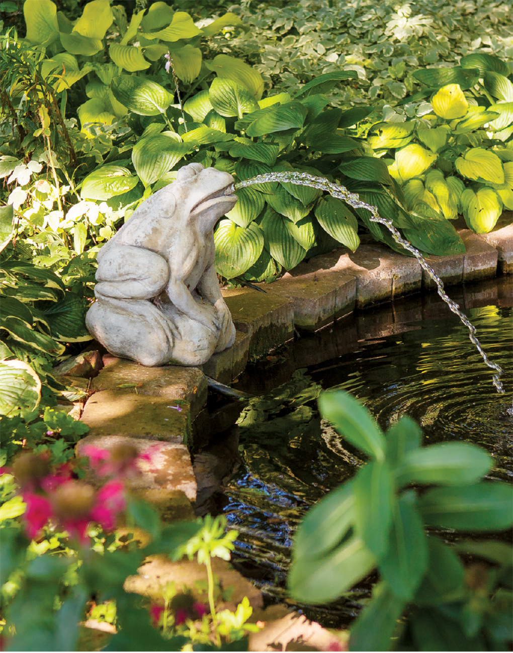 A pond with a frog fountain is a favorite of the family's St. Bernard.
