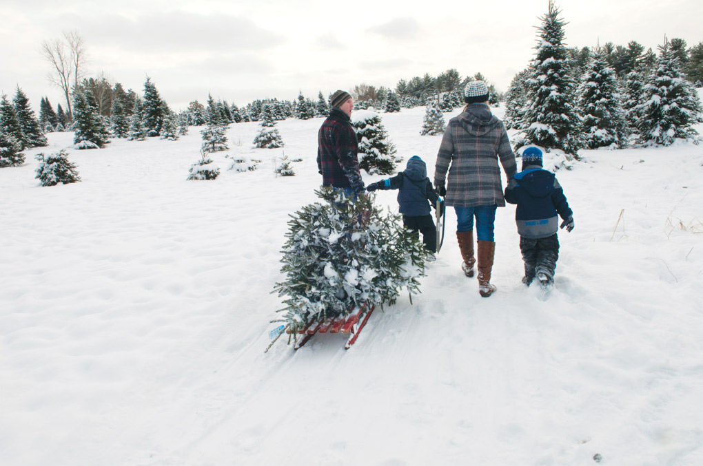 St-Croix-Valley-Trees_Sled-Family_G