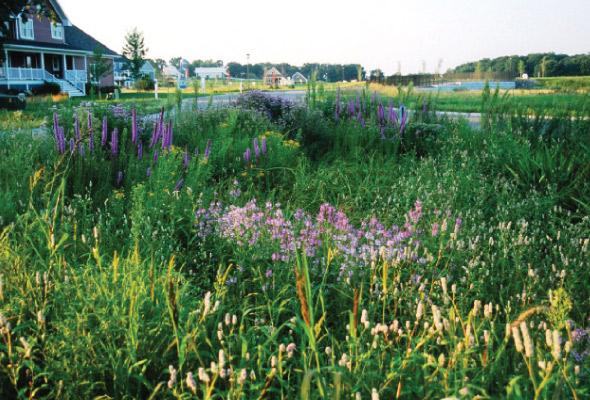 Prairie-restoration