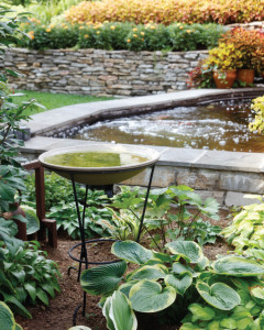 Bird-Bath_Hostas