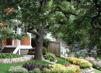 Front-yard-plants