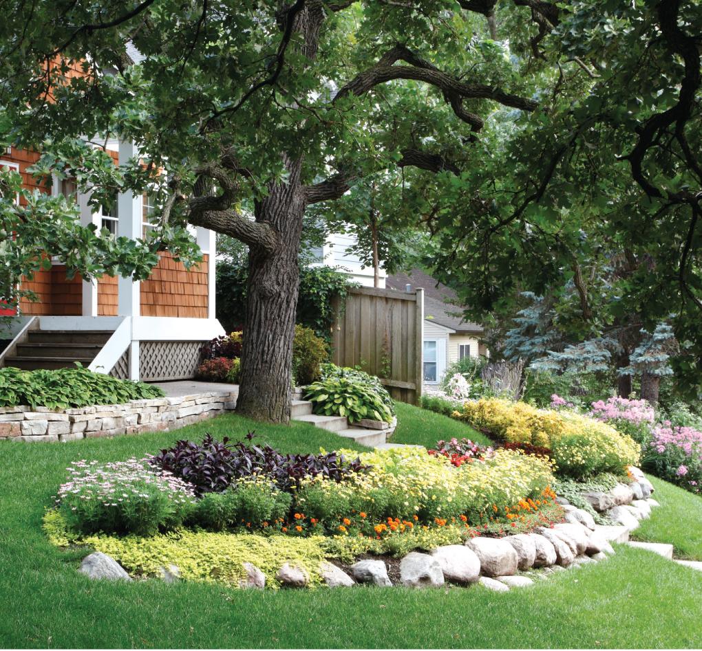Minneapolis Gardener Replants Yearly