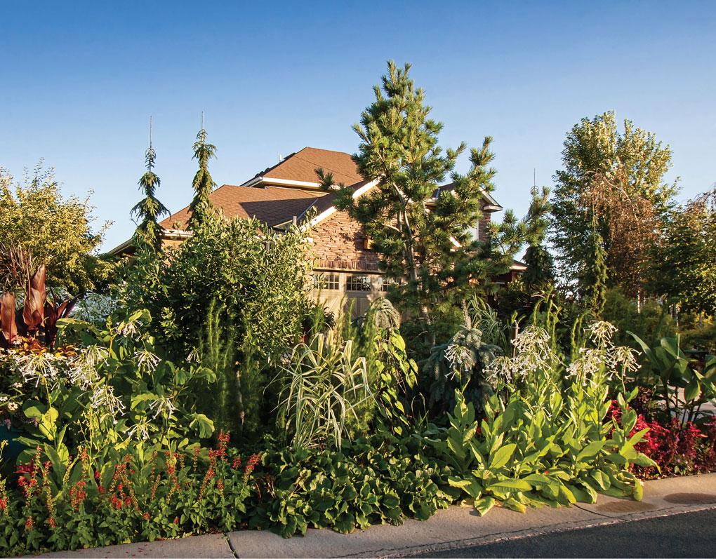 Plants Surround Engelmann's Home