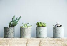 Concrete Planters with succulents