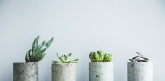 Concrete Planters with succulents