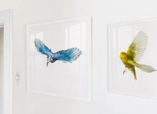 Wild Birds Flying framed