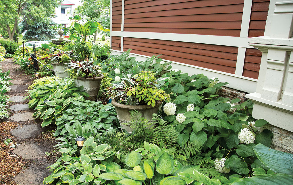 A shady path is flanked by hostas leading to the backyard of John and Leslie Mercer's St. Paul home.