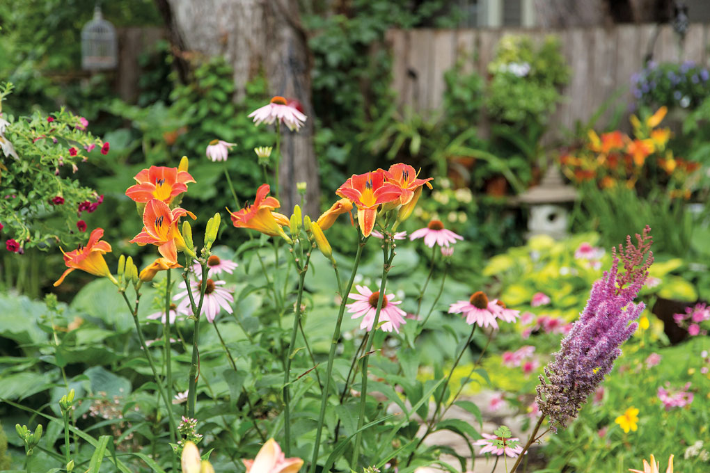 A collection of colorful perennials, including daylillies, cone flowers and astilbe.