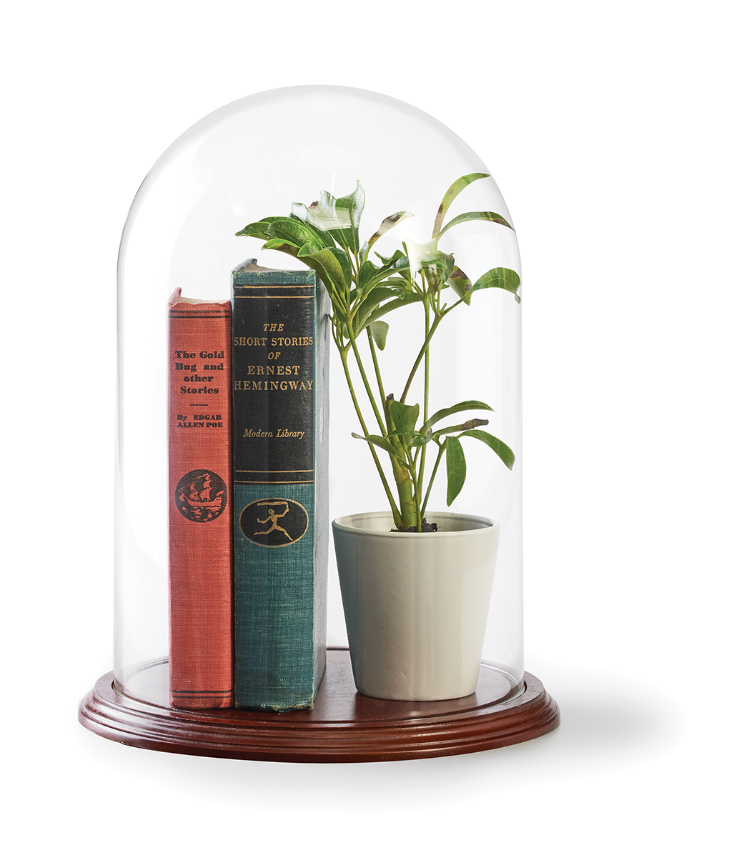 A cloche with books and potted plant inside.