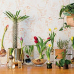 A collection of plants in vases and pots.