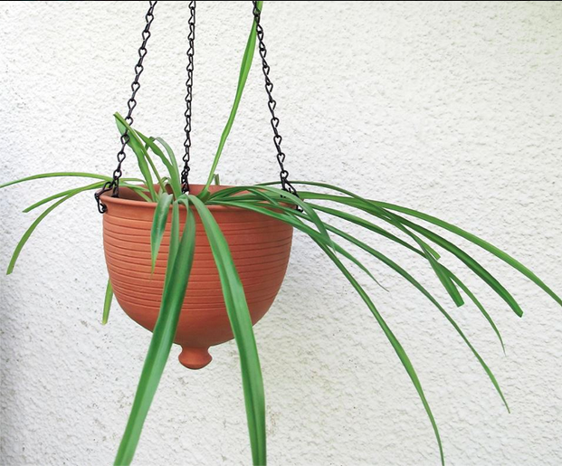 terracotta hanging planter