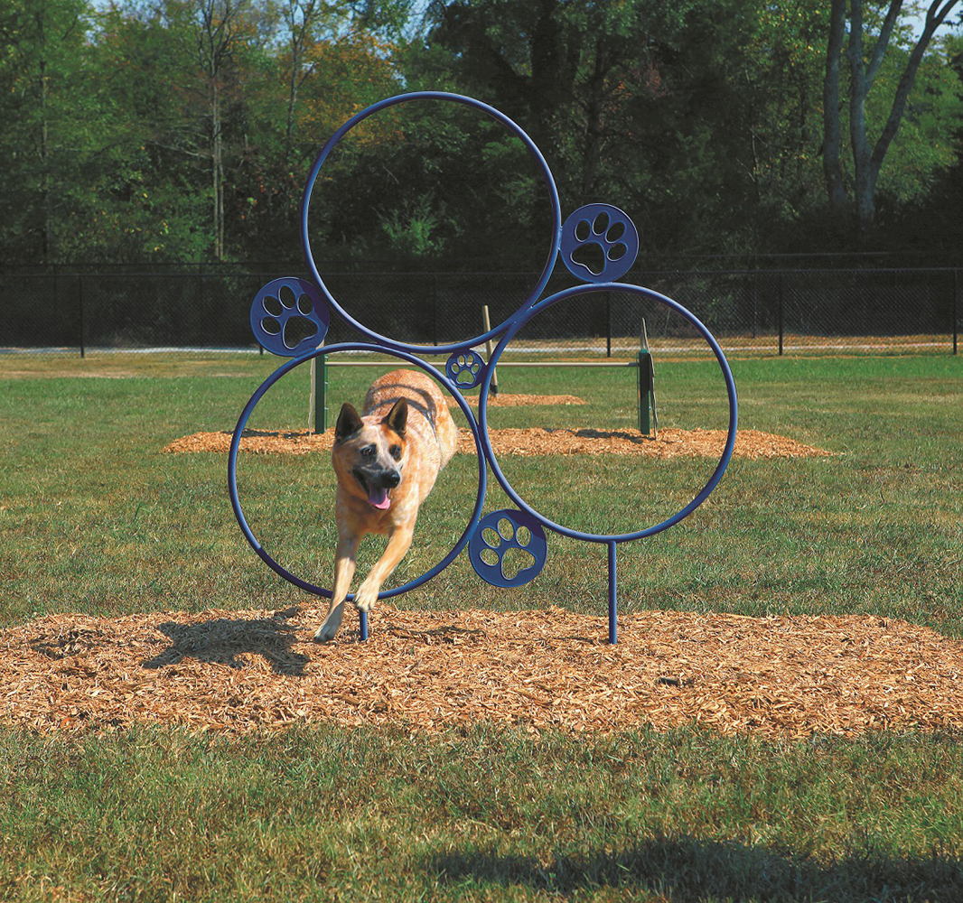 Photo of dog playing on playground