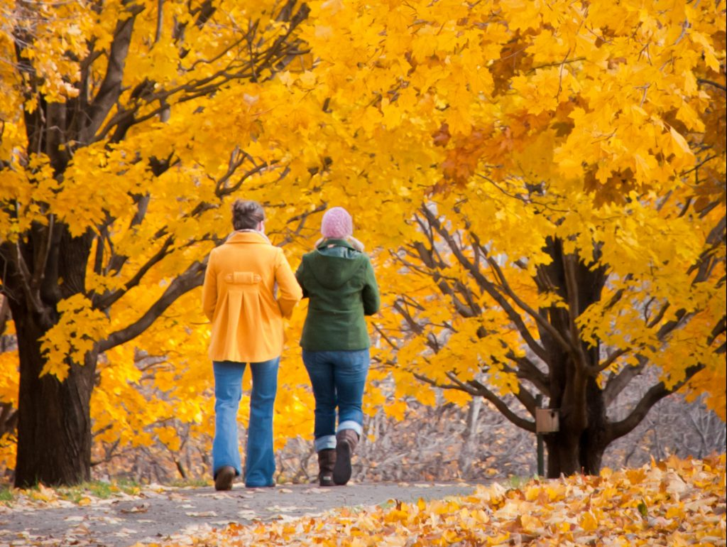 Couple walking through fall trees