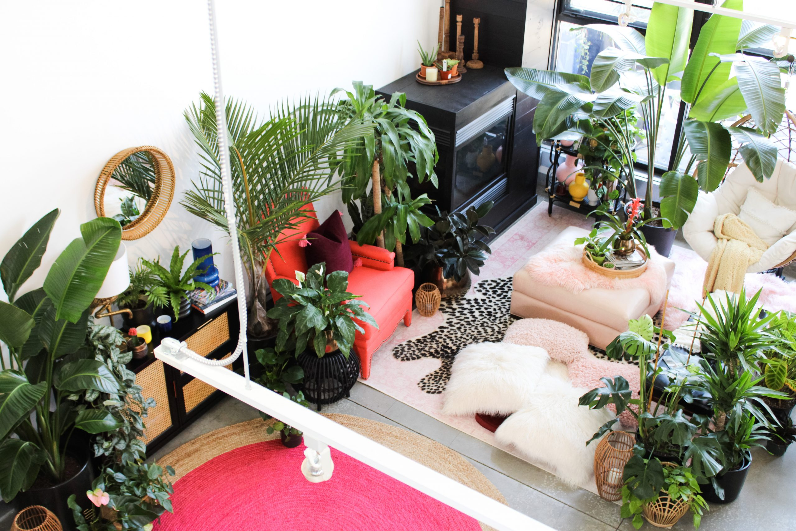 An upper view of Shayla Owodunni's Plant Penthouse