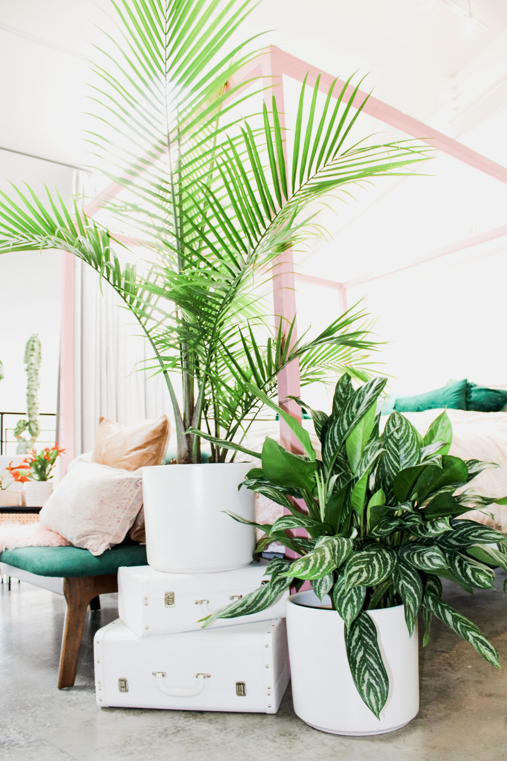 A vignette in The Plant Penthouse